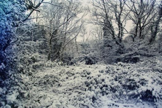 snowy landscape (4)